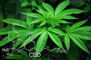 Marijuana, Feuilles, Cannabis, Vert, Naturelles